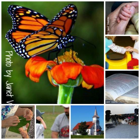 Eden Collage 1