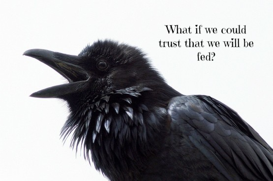 Ravens and Trust